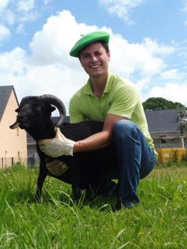 eco-paturage professionnel, ecopaturage, location de moutons